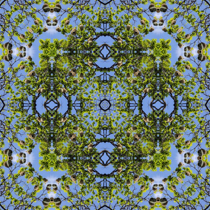 Finch nests in an Oak tree Mandala 52 cm 52 cm LIMITED Edition Giclee Prints available. http://julianventer.com/ ©julianventer