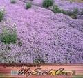 REGULAR CREEPING THYME Herb Seeds - Thymus Serpyllum - Butterflies love it so will You - ZONES 4 - 9