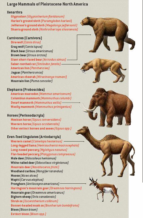 pleistocene america - Google Search
