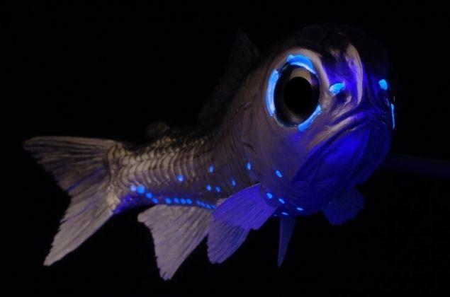 Deep ocean life creepy deep sea sea life photo for Deep sea fishing marina del rey