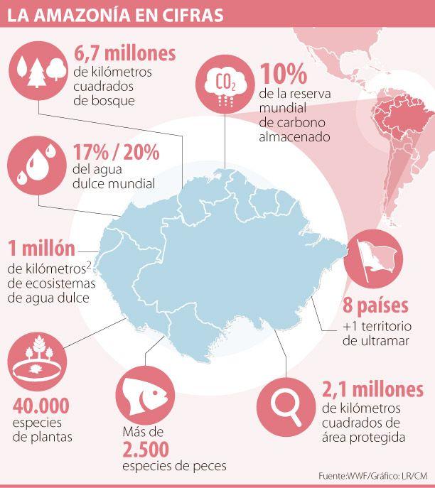 WWF identificó 31 frentes de deforestación en la Amazonía