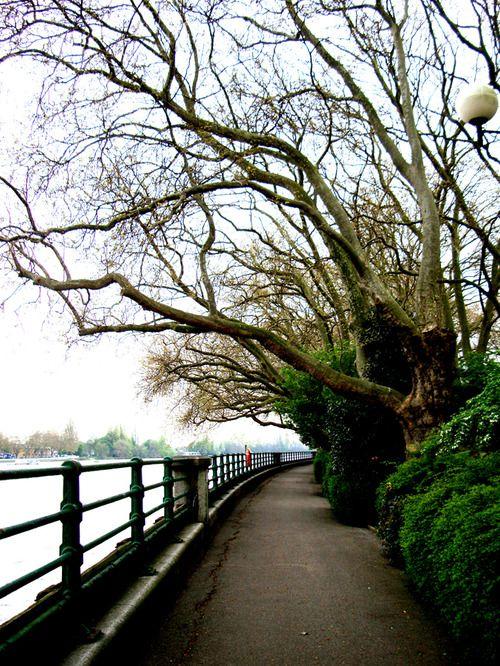 TAMESIS - LONDON