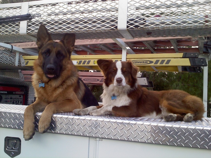 Working dogs at work!
