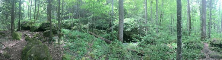 [oc] Rock Garden Trail, Red River Gorge, Ky. [3840x1080]