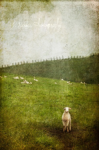 Jamie Heiden textured photo