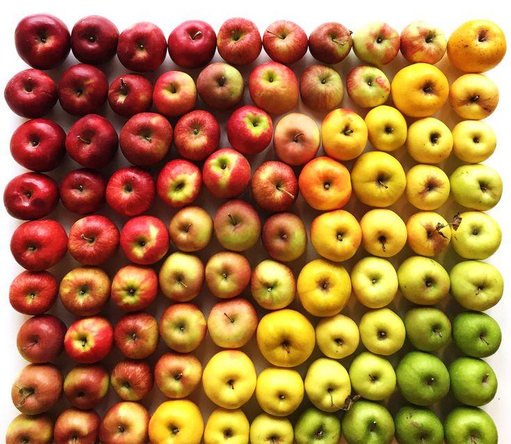 Food Gradients - Album on Imgur