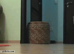 cats are smart .gif