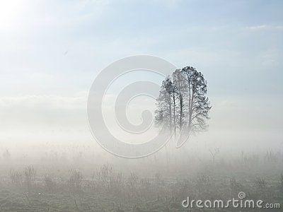 Albero Nebbioso - Scarica tra oltre 40 milioni di Foto, Immagini e Vettoriali Stock ad Alta Qualità . Iscriviti GRATUITAMENTE oggi. Immagine: 66674778