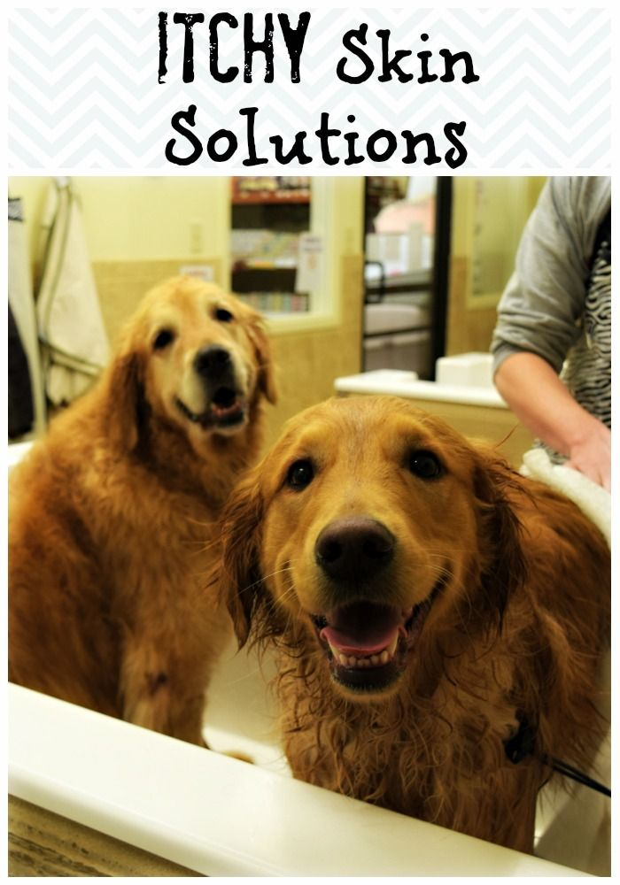 22 best dog grooming images on pinterest dog grooming dog a trip to the self wash with organic oscar giveaway solutioingenieria Image collections