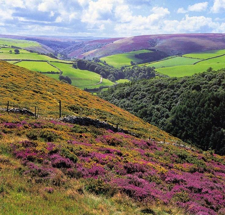 Dartmoor devon uk favorite places amp spaces pinterest