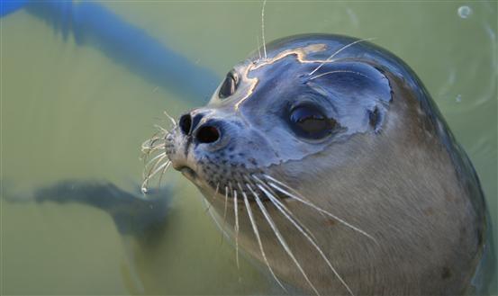 Ecomare op #Texel is een unieke opvang voor vogels en zeehonden. Meer informatie: http://www.ecomare.nl/