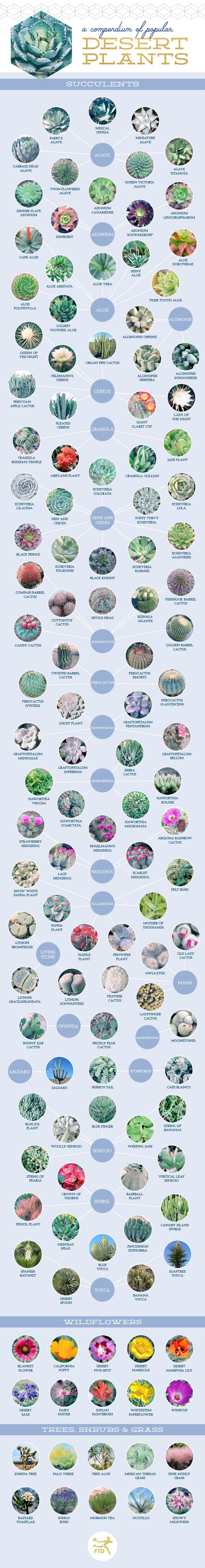 A Compendium of Popular Desert Plants #Infographic #Plants
