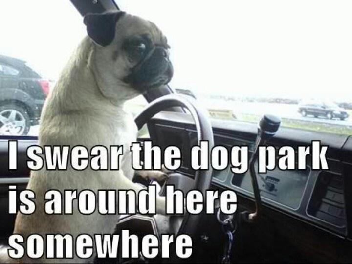 Run puggy, run!!!