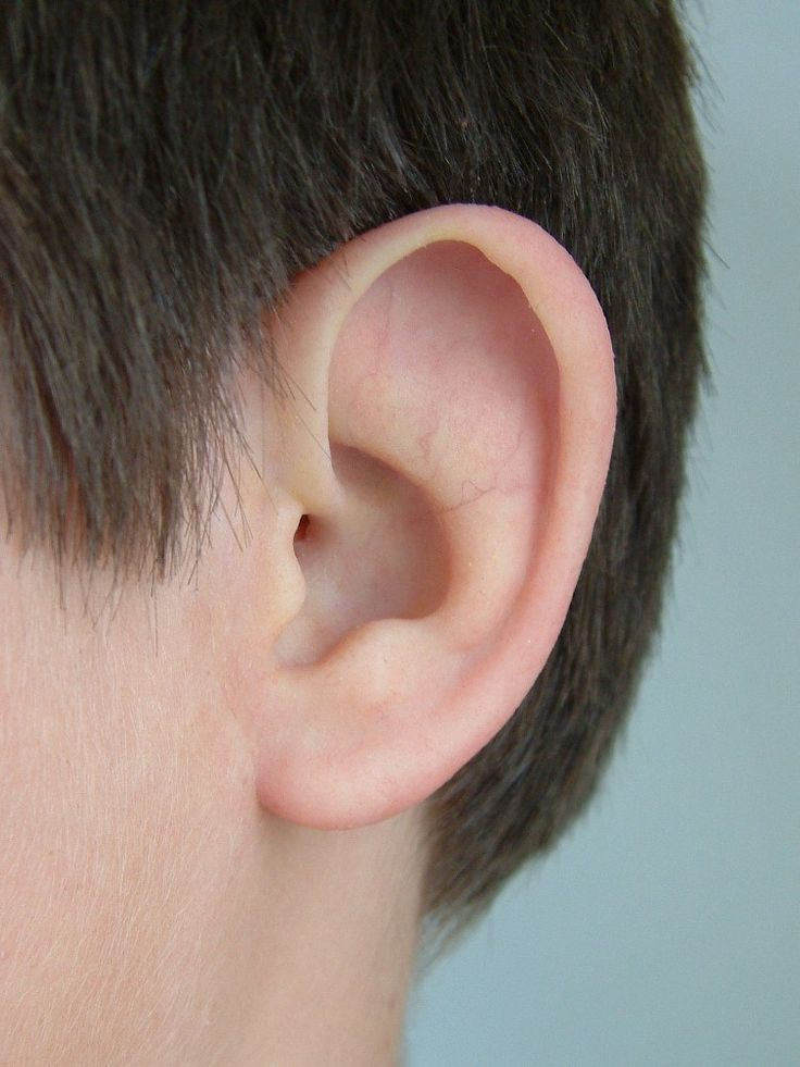 20 best ears images on Pinterest | Ears, Ear and Anatomy reference