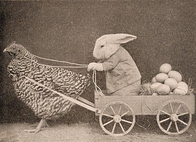 Chicken & Bunny - I wonder if I can get Dutchie bunny to do this with one of the ducks.@erinprice  Can your chickens do this?