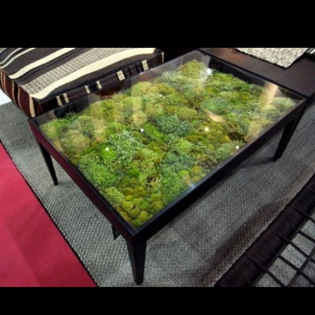 Moss Table Home Ly Pinterest Interior Plants Plants