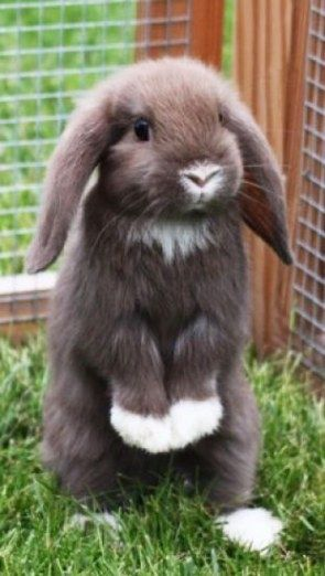 Resplendent rabbit #rabbitoftheday
