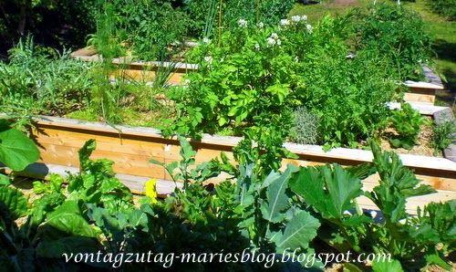 Hochbeet im Juni. Eine kunterbunte Gemüsemischung.  @vontagzutagmari http://vontagzutag-mariesblog.blogspot.com
