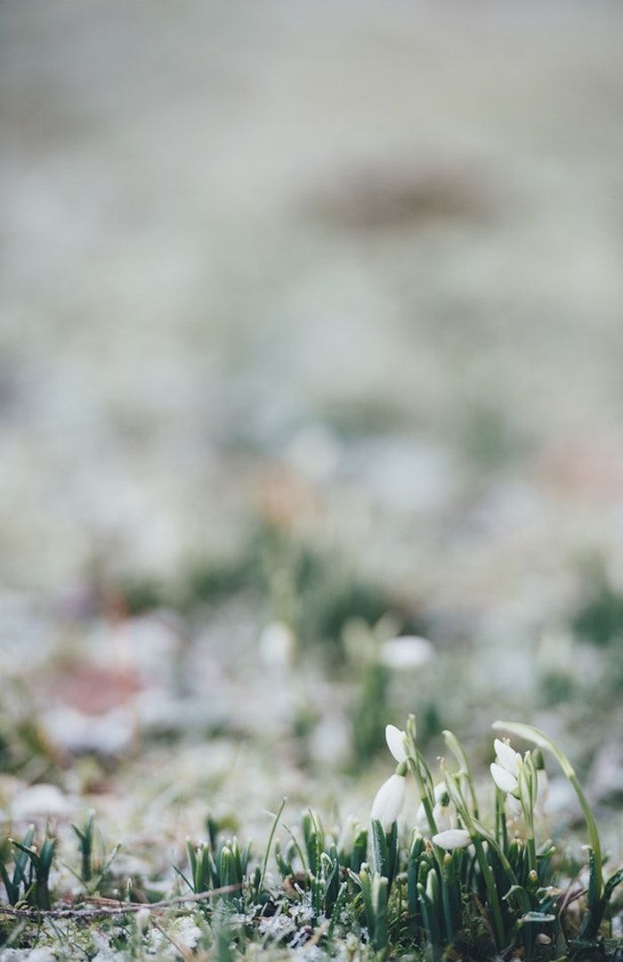 foto de ▷ 1001 + photos de paysage de printemps pour célébrer le réveil ...