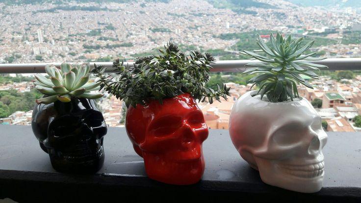 Succulents. Succulent planters. Sculls. Suculentas
