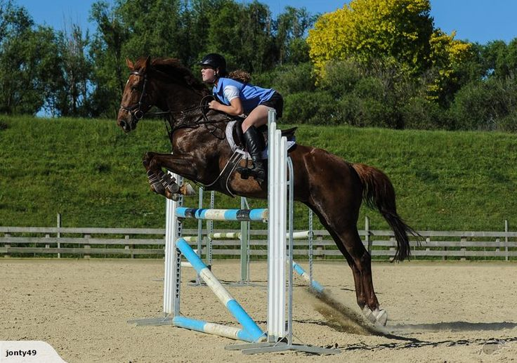 http://www.trademe.co.nz/sports/equestrian/horses-ponies/horses/auction-1218207458.htm