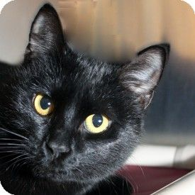 Cat Adoption Walnut Creek Ca