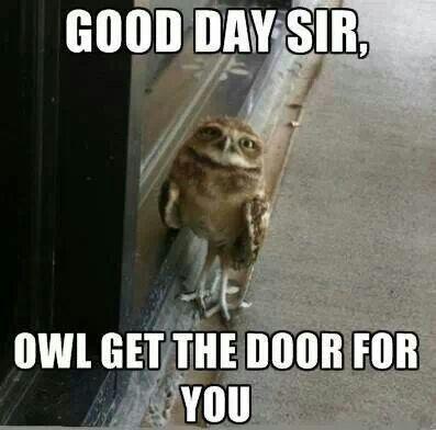 Funny owl :)