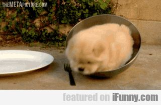 This Puppy Is Forever Stuck In A Bowl