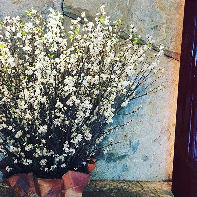 【25ansjp】さんのInstagramをピンしています。 《今年、初の#お花見 ⁈ #ペニンシュラ さんを訪れたら、丸の内仲通り側のエントランスのお花が早くも桜で、なんだか嬉しくなりました。 #ロビー の桜アフタヌーンティーが待ち遠しい❤️ #peninsula #桜 #春の花 #編集g子》