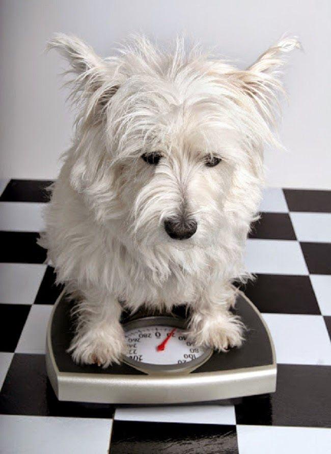 Dobór diety dla psa