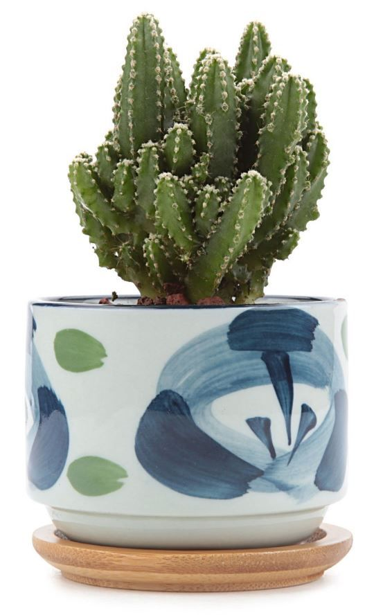 8 Plant Pots to Help your Succulents Thrive