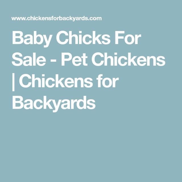 Baby Chicks For Sale - Pet Chickens   Chickens for Backyards