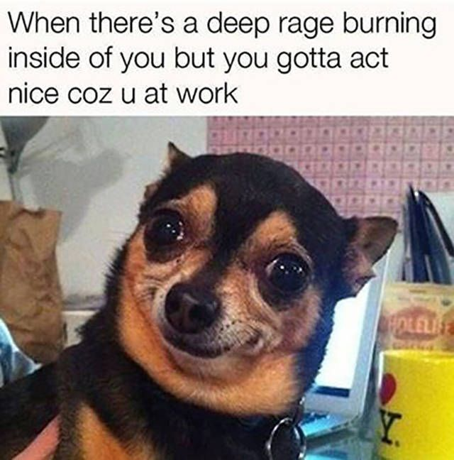 Funny Work Quotes Funny Work Quotes Photos To Prepare You For The Work Week Funny Dog Memes Funny Animal Memes Work Quotes Funny