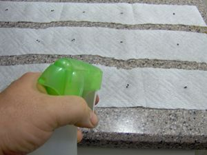 How to Make Your Own Seed Tape for Small Seeds
