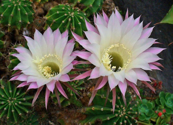 Plante Grasse Fleur Rose Le Top 10 Des Plus Jolies Pour Votre