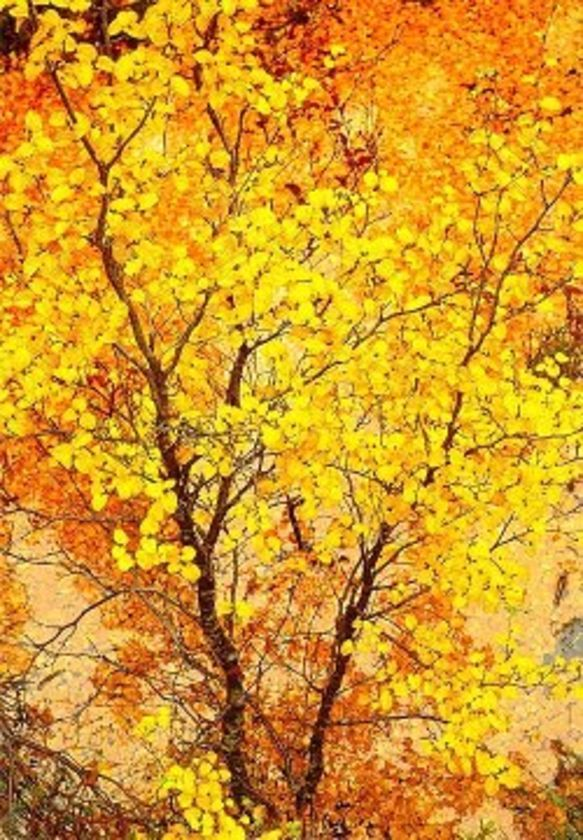 Image result for fagus trees