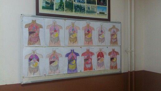 2. Sınıf organlarimiz