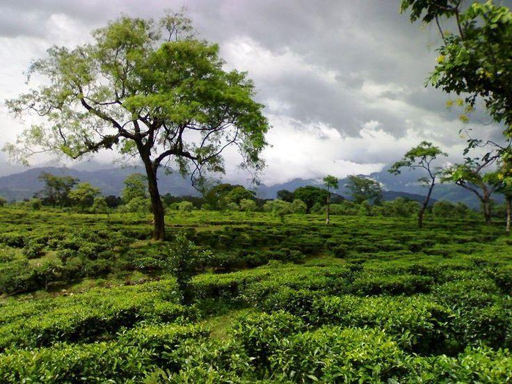 Simbalbara Wildlife Sanctuary - in Himachal Pradesh, India