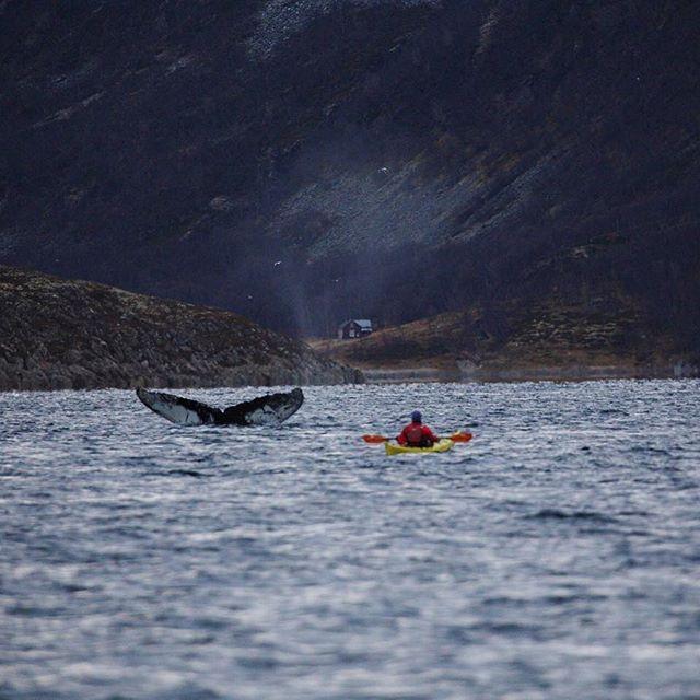 Whale watching in Tromsø, Norway • • • #thisworldtraveled #norway #visitnorway #visittromso #humpbackwhale #kayak #outdooradventure #ouradventures #nature #wildlife #arctic #northernnorway #ig_northernnorway #arcticadventurestours @northernnorway #cetacean #marinelife #marinemammals #neverstopexploring #wanderlust #worldtravels #ig_addict #canonphotography #canon #canon_photos