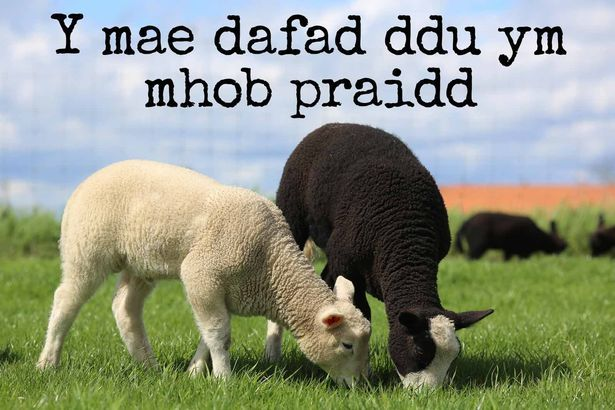 24 beautiful Welsh proverbs that show the language at its finest