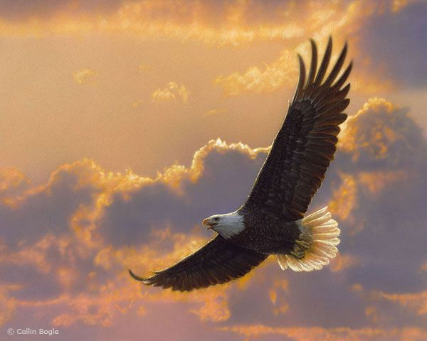 Bald eagle in flight wildlife painting - I'm sorry, but I just don't believe this is painted.