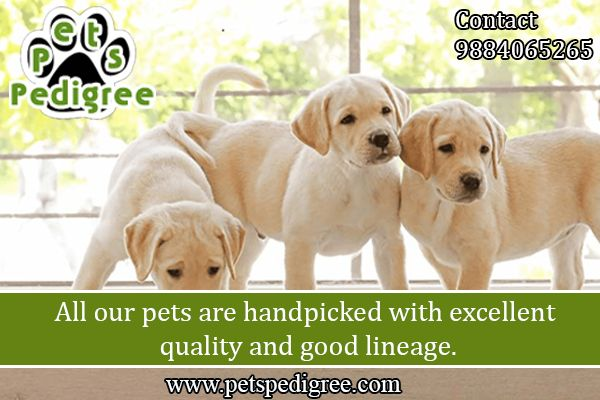 Pets Pedigree Chennai In 2020 Pets Dogs Breeds Pets Pet Puppy