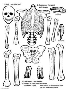 skeleton cut paste unit primary grades teachersrock60 anatomy. Black Bedroom Furniture Sets. Home Design Ideas