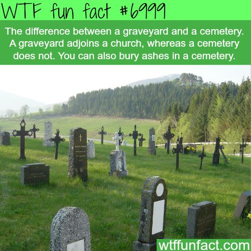 Difference between graveyard and cemetery - WTF fun facts
