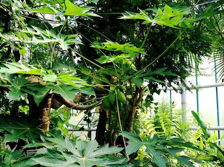 http://www.rostliny-semena.cz/galerie/papavaa_1354136722.jpg