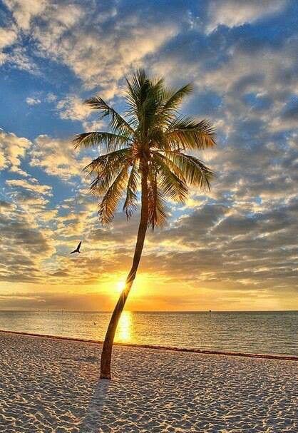 Un palmier dressé sur une plage de Florida.