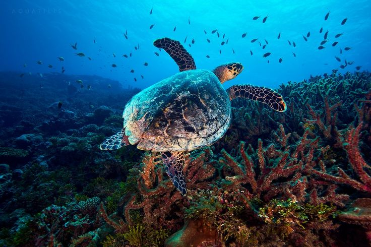 Картинки животных тихого океану
