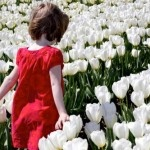 I'd love to see the tulip fields in Holland.