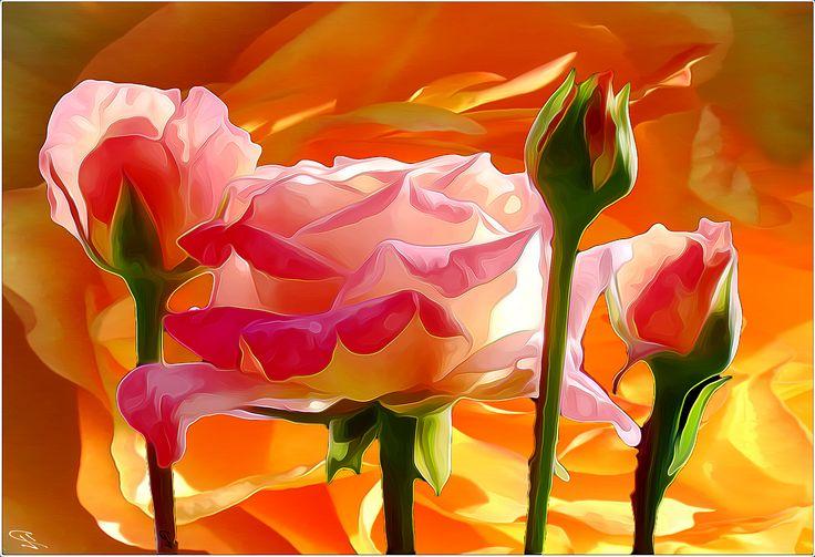 https://flic.kr/p/FrAsgs | todays roses
