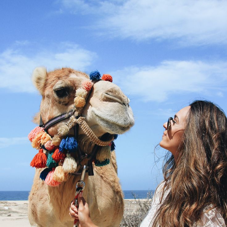 CAMEL . LOVE   Camel Riding in Cabo San Lucas, Mexico - elanaloo.com